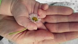 Szturm modlitewny za nasze Mamy!  - miniaturka