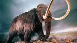 Niesamowite. Na Śląsku odkryto szczątki … mamuta! - miniaturka