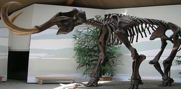 Terlikowska: Lewactwo jak mamuty, samo wyginie - zdjęcie