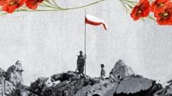 SZOK!!! Francuzi zdobyli Monte Cassino?! Jak próbuje się zakłamywać historię i wymazać wkład Polaków w zdobycie Monte Cassino - miniaturka