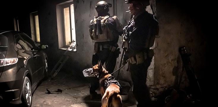 Policja rozbiła kolejny gang. Przejęto narkotyki i broń - zdjęcie