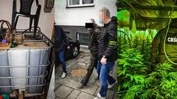 Kolejny cios w narkobiznes. Śląska policja zlikwidowała dwie plantacje konopi - miniaturka