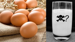 Dr J. Jaśkowski: 50 lat oszustwa jajczarskiego, czyli mody w medycynie - miniaturka