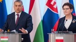 Matka Kurka: Czy w Polsce będzie jak na Węgrzech?  - miniaturka