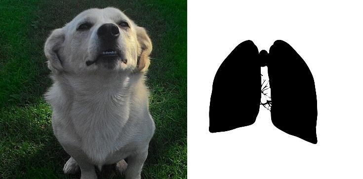 Psy mogą uratować życie chorych na raka płuc! - zdjęcie