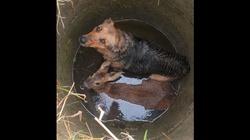 Pies i sarna razem wpadły do studni - miniaturka