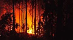 Nastolatkowie podpalali lasy! Straty liczone w tys. zł - miniaturka
