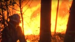 Magazyn Anity Gargas - prawda o tajemniczych pożarach w Grecji - miniaturka
