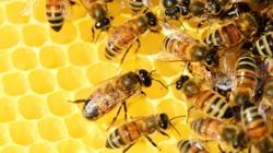 Prokuratura prowadzi śledztwo w sprawie masowego zatrucia pszczół - miniaturka