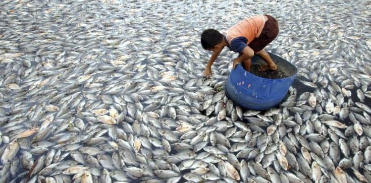 Ryby, ryby, kupujemy ryby... ale nie TAKIE!!! - zdjęcie
