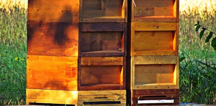 Szokujący wandalizm. Zalali ropą 21 uli, zginęło kilkadziesiąt tysięcy pszczół   - zdjęcie