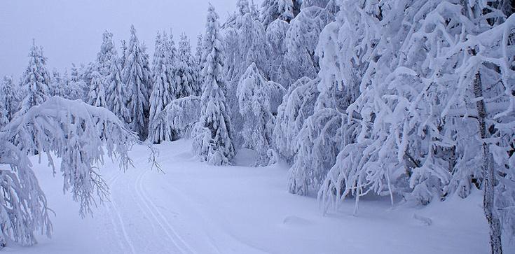 Jerzy Bukowski: Kogo zimą zaskoczyła zima - zdjęcie