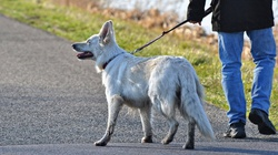 Pies bez smyczy na spacerze - nie zawsze grozi nam mandat - miniaturka