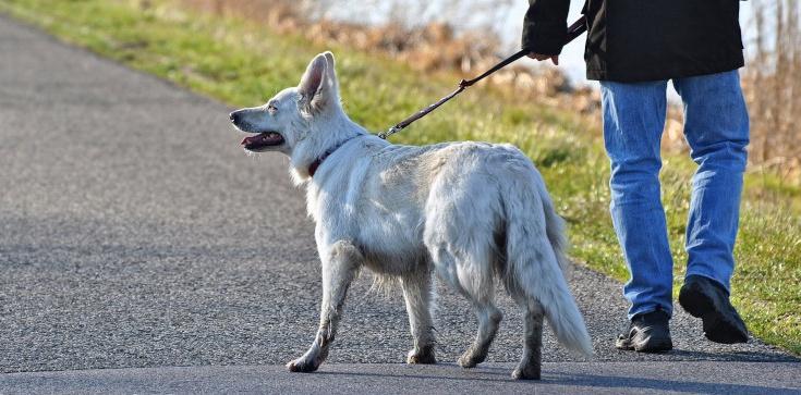 Pies bez smyczy na spacerze - nie zawsze grozi nam mandat - zdjęcie