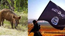 Świnki bohaterki pokonały dżihadystów! - miniaturka