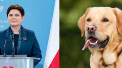 Rząd PiS w obronie zwierząt! - miniaturka