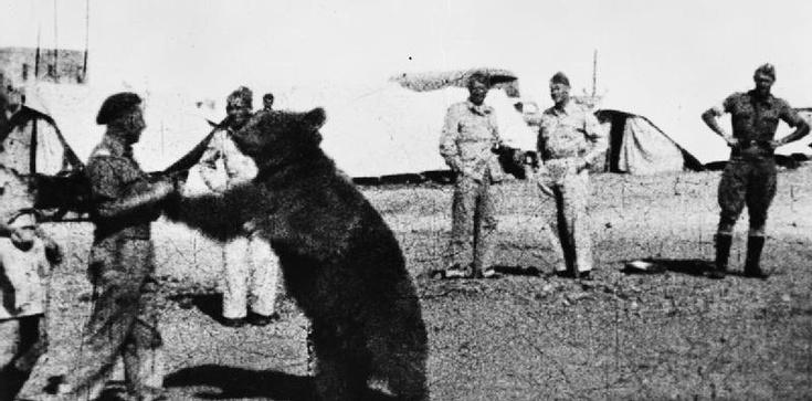 Opiekun niedźwiedzia Wojtka podpułkownikiem - zdjęcie