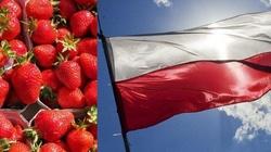 Truskawki z Polski to już rozpoznawalna, światowa marka - miniaturka