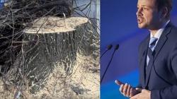 Trzaskowski jednak wycina drzewa nad Wisłą - miniaturka