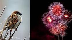 Ptaki kontra sylwester. Aktywiści policzą martwe zwierzęta - miniaturka