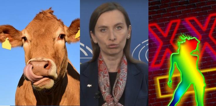 Sprzeciwia się gwałceniu krów - domaga się legalizacji prostytucji - zdjęcie