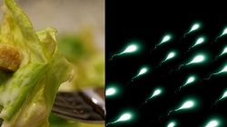 Wegetarianie mają słabą spermę i częściej chorują - miniaturka