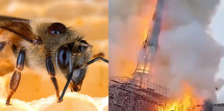 Pożar Notre-Dame przeżyło niemal 200 tys. pszczół - zdjęcie