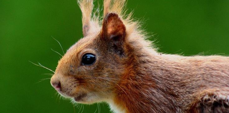 Mamy wiewiórkę i nie zawahamy się jej użyć... - zdjęcie