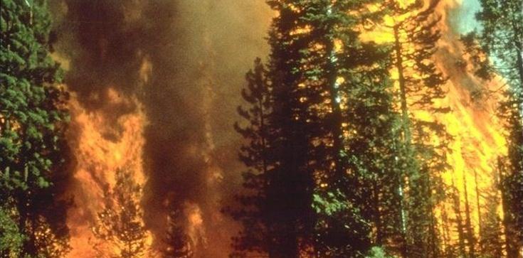 Polskie lasy... płoną. W maju 1300 pożarów - zdjęcie