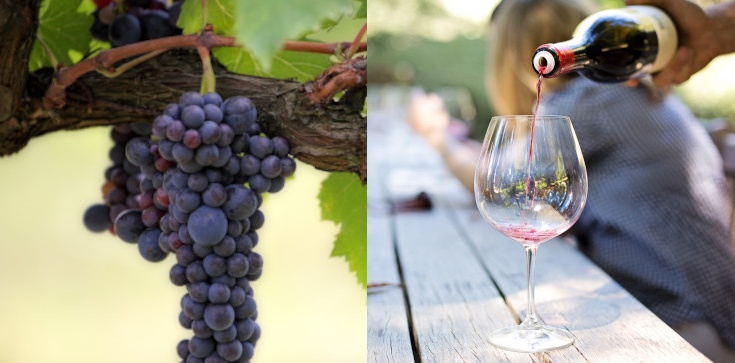 Czy czeka nas rok bez wina? A może dekada? Fatalne informacje od producentów - zdjęcie
