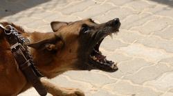 Surowe kary za niedopilnowanie niebezpiecznych psów - miniaturka