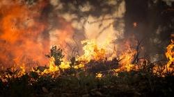 Płonie Biebrzański Park Narodowy. Ważna decyzja premiera Morawieckiego - miniaturka