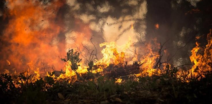 Płonie Biebrzański Park Narodowy. Ważna decyzja premiera Morawieckiego - zdjęcie