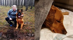 Mężczyzna skatował psa i zakopał w lesie. Uratował go drugi czworonóg - miniaturka