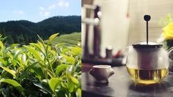 Zielona herbata - źródło zdrowia!!! - miniaturka