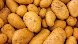 Leczenie ziemniakami, czyli co kryje łupina!!! - miniaturka