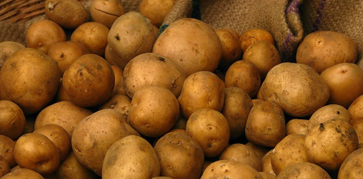 Uwaga: Kartofel - największe odkrycie Kolumba - czyni cuda!!! - zdjęcie