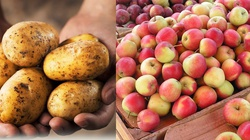 Ziemniaki i jabłka leczą ciężkie schorzenia  - miniaturka