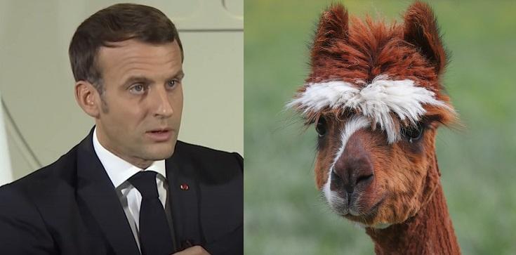Francja. Zwierzęta bardziej chronione niż ludzie? Czy zostanie powołany rzecznik praw zwierząt? - zdjęcie